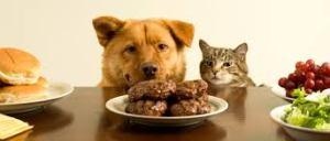 dog looking at food